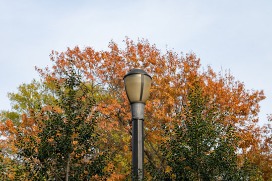 Street Light with Colorful Trees at Tompkins Square Park during Autumn in the East Village of New York City