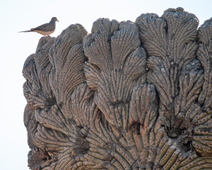 bird perched on brain cactus