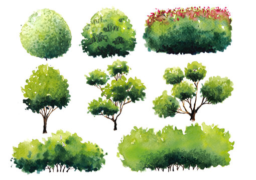Collection plant shrub symbols of Landscape architect for decorate garden. Watercolor hand drawn painting with brushes strokes.Colorful splashing in the paper.It's wet texture background.