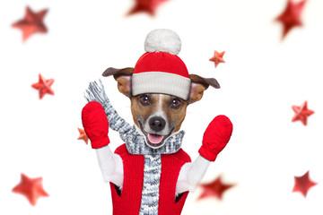 In de dag Crazy dog christmas santa claus dog