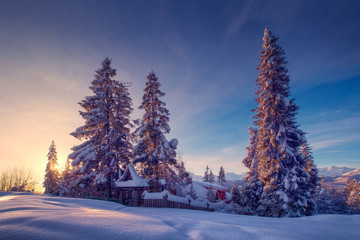 In de dag Bomen Christmas trees covered with snow in mountain landscape