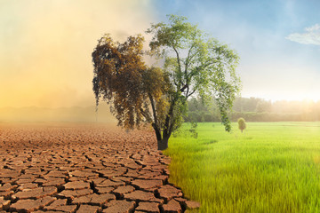 Climate change, A drying tree with air pollution and green grass with beautiful sunlight sky metaphor world nature disaster and global warming concept.