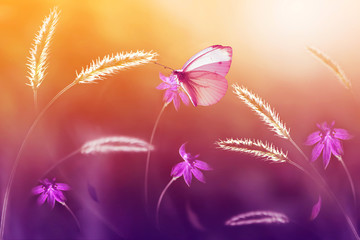 Pink butterfly  against a background of wild flowers in purple and yellow tones. Artistic image. Selective focus.