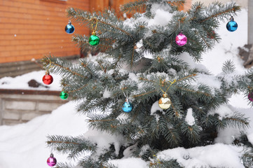 Christmas Tree in the House Garden. Colorado Blue Spruce Tree  Covered Snow with Colorful Christmas Balls Decoration.