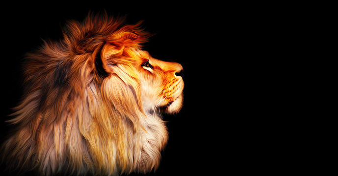 African lion profile portrait isolated on black background, spectacular dramatic king of animals, proud dreaming fantasy Panthera leo looking forward. Stylized photo banner with copy space for text.