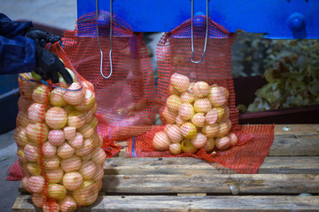 The hands of the employee who packed the sorted peeled onions bulbs into a mesh bag on the sorting line. Production facilities of grading, packing and storage of crops of large agricultural firms.