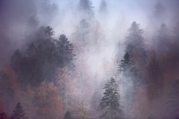 Door stickers Lavender Breathtaking scenery of a beautiful tree forest enveloped in fog - great for a cool wallpaper