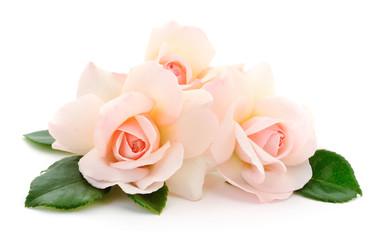 Keuken foto achterwand Roses Beautiful pink roses.