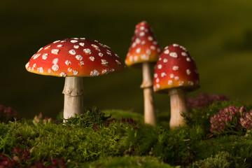 Three toadstools fairy background