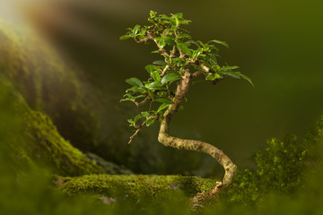Tuinposter Bonsai Bonsai backdrop with moss