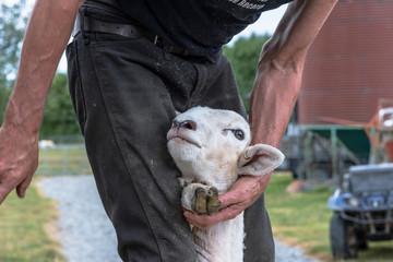 Neuseeland Südinsel - Schaffarm in der Canterbury Region