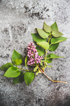 Lilac on grey background