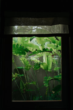 View from the window to the tropical garden