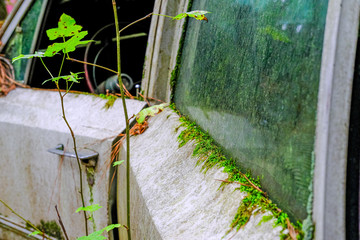 Green Moss on Old Car Door and Windows