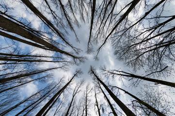 Ein abgebrannter Wald aus der Froschperspektive
