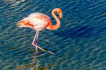 Foto op Aluminium Flamingo Flamingo - Isabela Island - Galapagos Islands - Ecuador