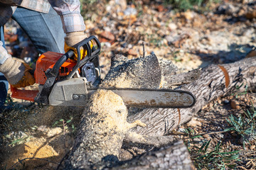 A lumberjack is sawing a tree with a chainsaw