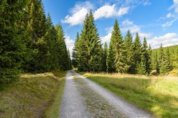 Photo sur Plexiglas Route dans la forêt Forest road to Orle shelter in Jizera Mountains