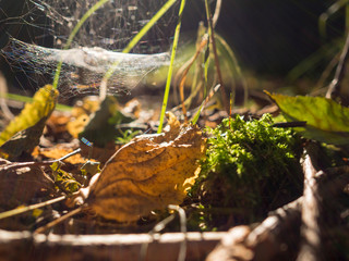Germany, Bavaria, Upper Palatinate Forest, wilted leaves and web