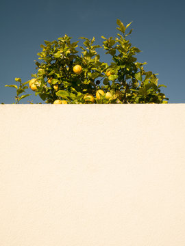 Low angle view of wall by lemon tree against clear sky during sunny day