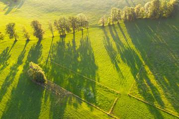 Aerial view of trees with long shadows on meadow at Wackersberg, Isarwinkel, Upper Bavaria, Bavaria, Germany Fotobehang