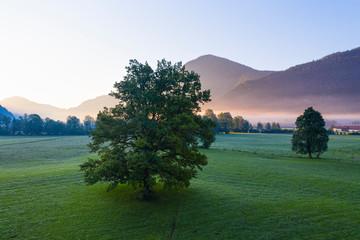 Germany, Bavaria, Upper Bavaria, Isarwinkel, Jachenau, oak at sunrise