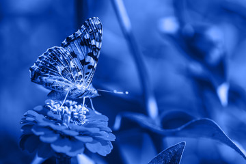 Color of the year 2020. classic blue. macro photo of butterfly