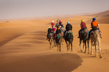 Poster Kameel Camels caravan in the dessert of Sahara with beautiful dunes in background. Morocco