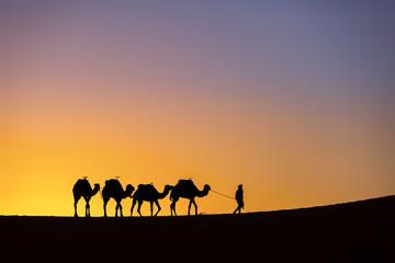 Foto op Plexiglas Marokko Silhouette of a camel caravan at sunrise in desert Sahara, Morocco