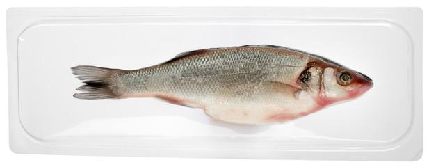 Fresh vacuum packed whole sea bass fish