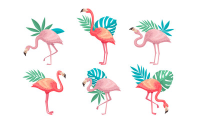 Tuinposter Flamingo Beautiful Pink Flamingos Set, Tropical Exotic Birds with Palm Leaves Vector Illustration