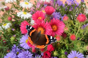 Blumen 1164