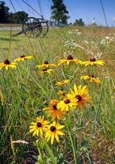 Fototapete - Wild flowers on Gettysburg battlefield