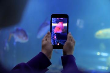 Woman taking photo of aquarium with fish, closeup Wall mural