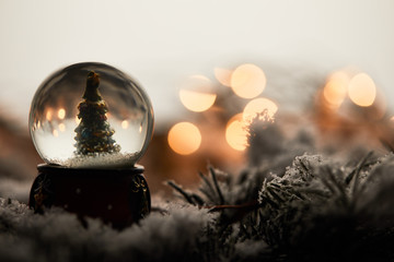 snowball with little christmas tree standing on spruce branches in snow with blurred lights