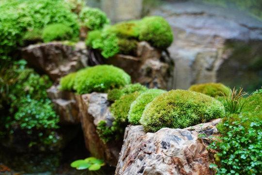 Tropical rain forest terrarium or paludarium with moss for rainforest animals