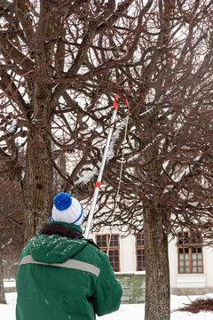 gardener pruning pruning trees in winter in a park. vertical
