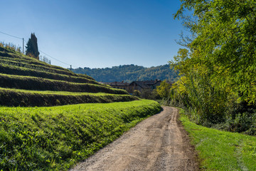 Vineyards in the park of Montevecchia and Curone, Italy, at fall
