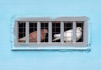 Pigeons sitting in captivity