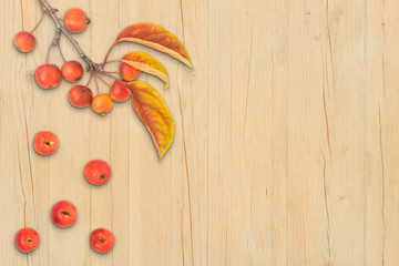 Autumn composition leaves fruits and branch of malus floribunda on light wood background border top view flat lay copyspace