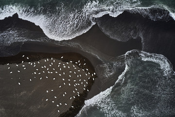 Drone view of birds and the ocean, Iceland