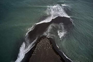Birds and the ocean& The aerial shot was taken in South coast of Iceland from a drone