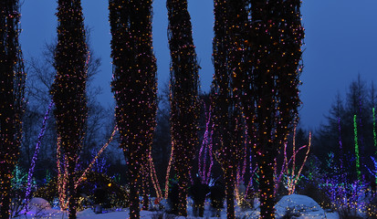 Fotobehang - Trees decorated with luminous garlands in a city park. Winter night festive view of decorated trees for the holidays of Christmas and New Year.