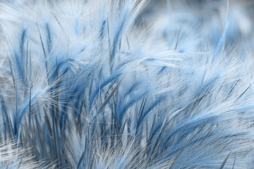 grass toned in classic blue. Color of the year 2020. Colorful concept.