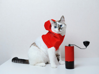 Cute blue-eyed cat in red Christmas hoodie on a white background. With manual coffee grinder. Free space, isolated