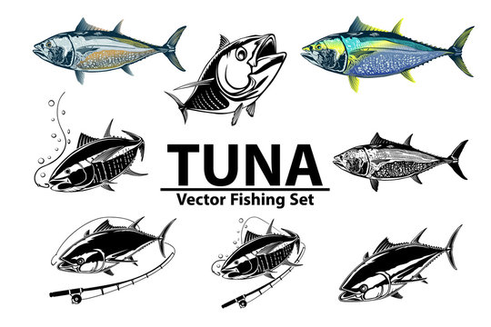 Tuna big eye fishing logo illustration. Yellowfin tuna fish fishing vector emblem. Blue fin fish marine theme. Angry fish.