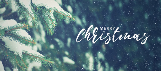Wall Mural - Merry Christmas Text With Winter Season Holiday Evergreen Christmas Tree Pine Branches Covered With Snow and Falling Snowflakes, Horizontal