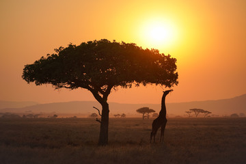 Sunset in Serengeti national park Tanzania