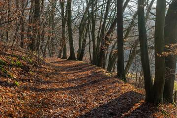 Im schönen Hanfbachtal in den Ausläufern des Siebengebirges