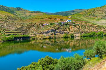 Printed kitchen splashbacks River Vineyards alongside river douro in Portugal